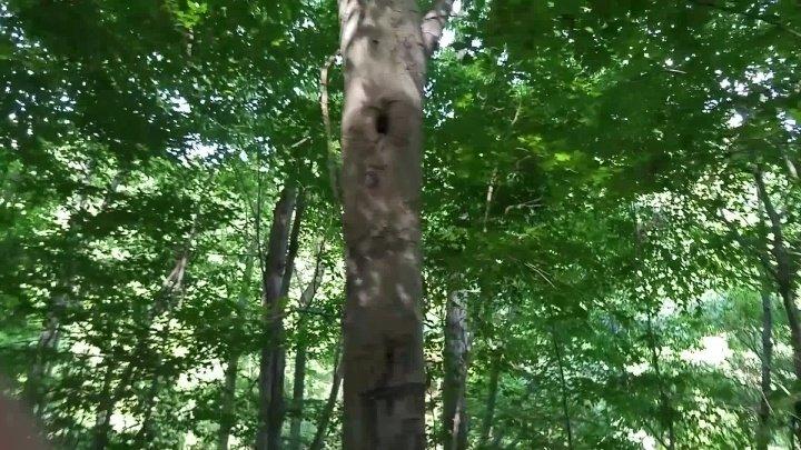 Candiecane Almost Caught Public Park Pee