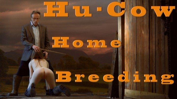 Ffezine Hu Cow Home Breeding